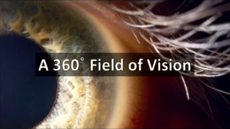 A 360 Degree Field of Vision
